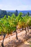 Το γαλλικό κόκκινο και αυξήθηκε σταφύλια κρασιού φυτεύει, αυξανόμενος στο ochre ορυκτό χώμα, νέα συγκομιδή του σταφυλιού κρασιού  στοκ φωτογραφίες