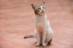Το γατάκι ανατρέχει Στοκ Εικόνα