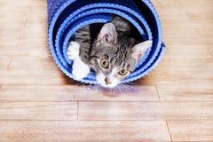 Το γατάκι βρίσκεται σε ένα τυλιγμένο μπλε χαλί για τη γιόγκα Στοκ Εικόνες