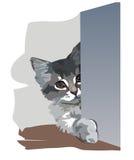 Το γατάκι είναι σε μια ενέδρα Στοκ Εικόνες