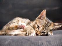 Το γατάκι θέτει στην καρέκλα Στοκ Εικόνες