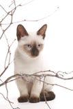 το γατάκι κολλά ξύλινο Στοκ Φωτογραφίες