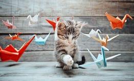 Το γατάκι παίζει με τους γερανούς εγγράφου Στοκ Εικόνες