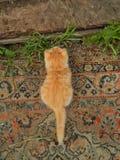 Το γατάκι περιμένει Στοκ Φωτογραφίες