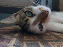 Το γατάκι ύπνου μου στοκ εικόνες