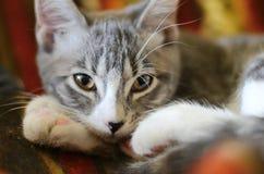 Το γατάκι Στοκ Εικόνα