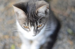 Το γατάκι Στοκ φωτογραφίες με δικαίωμα ελεύθερης χρήσης