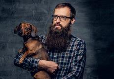 Το γενειοφόρο αρσενικό κρατά στα σκυλιά ασβών όπλων Στοκ Φωτογραφίες
