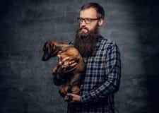 Το γενειοφόρο αρσενικό κρατά στα σκυλιά ασβών όπλων Στοκ Εικόνες