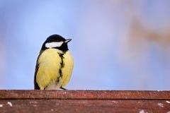 Το γενναίο titmouse κάθεται σε ένα birdhouse στοκ εικόνα