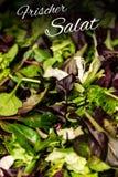 Το γερμανικό κείμενο frischer Salat σημαίνει τη φρέσκια σαλάτα με το μικτό πρασίνων μαρουλιού γεύμα τροφίμων arugula mesclun mach Στοκ Εικόνες