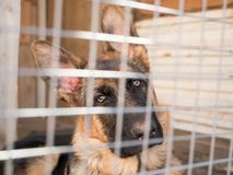 Το γερμανικό σκυλί ποιμένων κάθεται κλειδωμένος σε ένα κλουβί στοκ φωτογραφίες