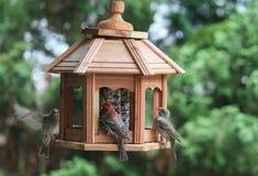 Το γεύμα πουλιών πίνακας-finches-παρουσιάζει Στοκ Φωτογραφία