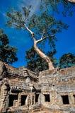 Το γιγαντιαίο δέντρο που καλύπτει το TA Prom και το ναό Angkor Wat, Siem συγκεντρώνει, ασβέστιο Στοκ φωτογραφία με δικαίωμα ελεύθερης χρήσης