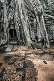 Το γιγαντιαίο δέντρο που καλύπτει το TA Prom και το ναό Angkor Wat, Siem συγκεντρώνει, ασβέστιο Στοκ φωτογραφίες με δικαίωμα ελεύθερης χρήσης
