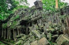 Το γιγαντιαίο δέντρο που καλύπτει το TA Prom και το ναό Angkor Wat, Siem συγκεντρώνει, ασβέστιο Στοκ εικόνες με δικαίωμα ελεύθερης χρήσης