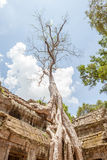 Το γιγαντιαίο και παλαιό δέντρο στο TA Prohm, Angkor Wat Στοκ φωτογραφία με δικαίωμα ελεύθερης χρήσης