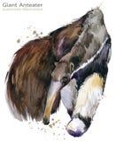 Το γιγαντιαίο χέρι anteater σύρει την απεικόνιση watercolor Στοκ εικόνες με δικαίωμα ελεύθερης χρήσης