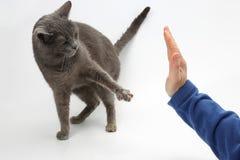 Το γκρίζο πόδι γατών με τα νύχια, παίρνει στο φοίνικα τα pers Στοκ φωτογραφία με δικαίωμα ελεύθερης χρήσης