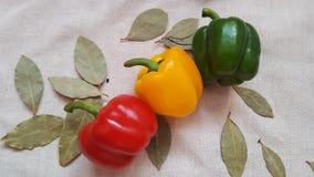 Το γλυκό πιπέρι των διαφορετικών χρωμάτων και του κόλπου βγάζει φύλλα στοκ φωτογραφία με δικαίωμα ελεύθερης χρήσης