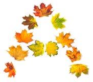 Το γράμμα Α που αποτελείται από το σφένδαμνο φθινοπώρου βγάζει φύλλα Στοκ Εικόνα