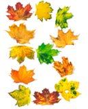 Το γράμμα Β που αποτελείται από το σφένδαμνο φθινοπώρου βγάζει φύλλα Στοκ φωτογραφία με δικαίωμα ελεύθερης χρήσης