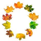 Το γράμμα Ο που αποτελείται από το σφένδαμνο φθινοπώρου βγάζει φύλλα Στοκ Εικόνες