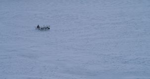 Το γρήγορο τρέξιμο ταράνδων μέσω tundra στη μέση της Αρκτικής και το άτομο είναι σε ένα έλκηθρο που φορά μια γούνα : απόθεμα βίντεο