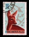 Το γραμματόσημο που τυπώνεται από τη Ρουμανία, παρουσιάζει σκηνή κυνηγιού ηλικίας ελαφιών αυγοτάραχων και χαλκού Στοκ φωτογραφία με δικαίωμα ελεύθερης χρήσης