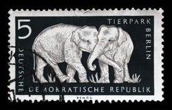 Το γραμματόσημο που τυπώνεται στην ΟΔΓ παρουσιάζει ελέφαντα, Βερολίνο, γερμανικός ζωολογικός κήπος Στοκ Φωτογραφίες