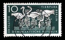 Το γραμματόσημο που τυπώνεται στην ΟΔΓ παρουσιάζει μεγαλύτερο φλαμίγκο, Βερολίνο, γερμανικός ζωολογικός κήπος Στοκ εικόνα με δικαίωμα ελεύθερης χρήσης