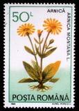 Το γραμματόσημο που τυπώνεται στη Ρουμανία παρουσιάζει Arnica Μοντάνα Στοκ φωτογραφία με δικαίωμα ελεύθερης χρήσης