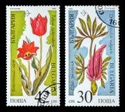 Το γραμματόσημο Στοκ φωτογραφία με δικαίωμα ελεύθερης χρήσης