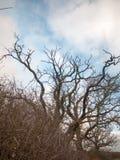 Το γυμνό φθινόπωρο διακλαδίζεται καμία φύση πτώσης φθινοπώρου φύλλων Στοκ φωτογραφία με δικαίωμα ελεύθερης χρήσης