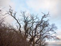 Το γυμνό φθινόπωρο διακλαδίζεται καμία φύση πτώσης φθινοπώρου φύλλων Στοκ φωτογραφίες με δικαίωμα ελεύθερης χρήσης