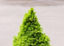 Το γυμνό χριστουγεννιάτικο δέντρο έτοιμο να διακοσμήσει Στοκ Εικόνα
