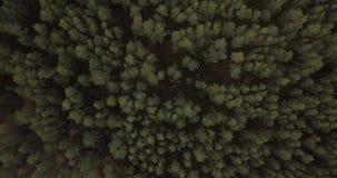 Το δάσος άνωθεν απόθεμα βίντεο