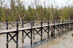 το δάσος γεφυρών πηγαίνει μαγγρόβιο Στοκ εικόνα με δικαίωμα ελεύθερης χρήσης
