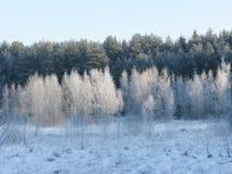 το δάσος εχιόνισε Στοκ εικόνα με δικαίωμα ελεύθερης χρήσης