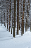 το δάσος εχιόνισε Στοκ Εικόνα