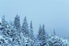 το δάσος εχιόνισε Στοκ Φωτογραφίες