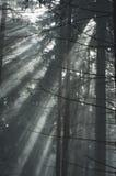 το δάσος εχιόνισε Στοκ φωτογραφία με δικαίωμα ελεύθερης χρήσης