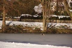 Το δάσος καλύφθηκε με το χιόνι και το πουλί - Γαλλία στοκ εικόνα