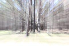 Το δάσος κινείται, δέντρα όπως με τη δράση ζουμ αλλαγής στη μακροχρόνια έκθεση, επίδραση ζουμ φακών Τοπία πυροβολισμού στο αργό π στοκ φωτογραφία με δικαίωμα ελεύθερης χρήσης