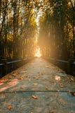 Το δάσος μαγγροβίων και η γέφυρα, φύλλα χρωματίζουν την αλλαγή Στοκ εικόνα με δικαίωμα ελεύθερης χρήσης