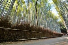 Το δάσος μπαμπού σε Sagano Arashiyama Κιότο Ιαπωνία Στοκ φωτογραφία με δικαίωμα ελεύθερης χρήσης