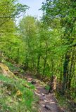 Το δάσος Παλατινάτου την άνοιξη Γερμανία Στοκ Εικόνες
