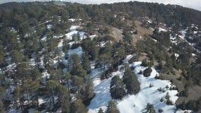 Το δάσος πεύκων στην αιχμή του βουνού στην ημέρα, χιόνι βρίσκεται στο έδαφος, εναέρια άποψη φιλμ μικρού μήκους