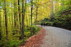 το δάσος πηγαίνει μονοπάτ&i Στοκ Εικόνες