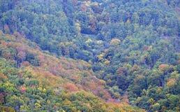 Το δάσος στα χρώματα φθινοπώρου Στοκ Εικόνα